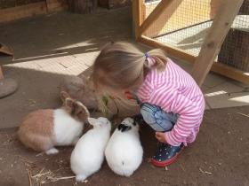 Kaninchen lieben Karotten